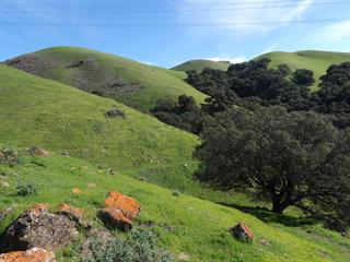 Hilly Lands Above Ohlone College